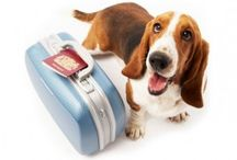 Traveling with Pets / Tips and advice on traveling with your furry friends