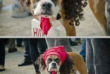 It made me laugh!! / by Tamera Sanders