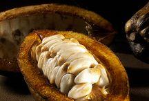 De la fève au chocolat / En 1879, le premier chocolat fin, fondant et onctueux vit ainsi le jour grâce à Rodolphe Lindt, qui découvrit la conche et le procédé de conchage.