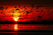 Sunrise & Sunset <3 / by Louise K