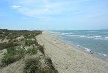 Marina di Vecchiano / Spiaggia e dune