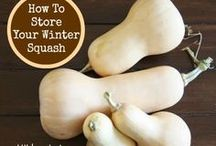 when and how to pick butternut  squash