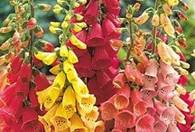 Annuals that prefer SHADE