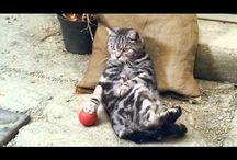 Funny Cats Videos / Funny Cats Videos