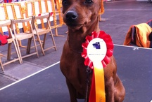 Dog Show / Fotos en exposiciones caninas.
