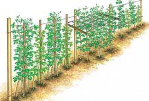 Pflanzen schneiden