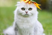 ♡   .  .  .Cats  .  .  .  ♡