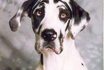 Dog Breeds I want / by Caroline Adams