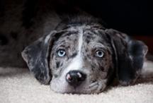 Cute Pets / by Jodie Boss-Wachal