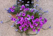 Balconi fioriti / Idee terrazza