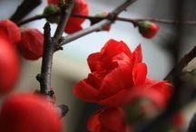Lady in risky happy red / Kobieta, miłość, kolor, energia, piękno.