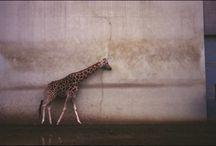Voyages photographies / Photographie d'auteurs sur le thème du voyage, paysage, reve