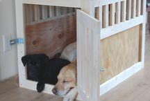Canine quarters