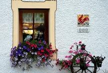 Flowers, door, window / Doors, windows, flowers beatiful colors