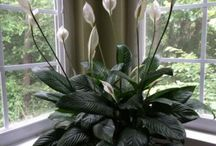 House Plants / Bring the green in year round with beautiful house plants.