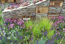 Garden / by Susannah Field