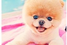 BOO!!!!!!!!!so cute!!!!!!!!!