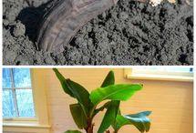 planter la vie