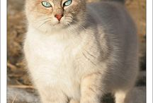 Kitties!!! <3