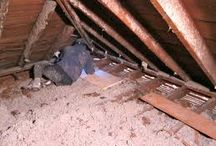 Attic Cleanup Insulation Removal Reseda CA /  We provide attic cleanup, insulation removal or replacement in Reseda CA. Animal dropping decontamination