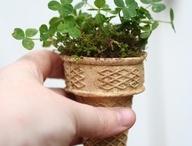 Herbs/Plants