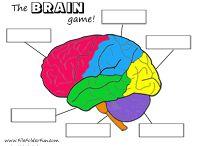 Homeschool Anatomy; Brain