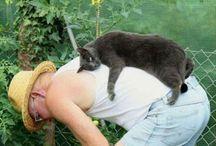 Lachen / Kattenplaatjes