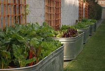 Veggie garden ideas / by Linda Rudman Behind My Red Door