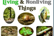 Living and Non LIving / by Cleo Jones