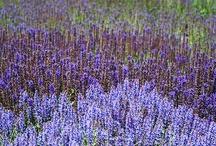 Tuinidee / Moodboard tuinen