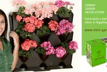 Legyél Te a következő, akinek zöld falat építünk! / Nyomj egy lájkot erre a bejegyzésre 2015.11.22.-ig a Facebookon, mert a lájkolók között sorsolunk egy függőleges kertet! Látogasd meg honlapunkat a további információkért! http://www.mini-garden.hu/…/miniga…/minigarden_vertical.html