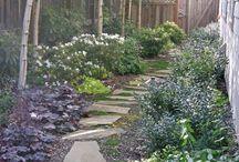 Side yard planting