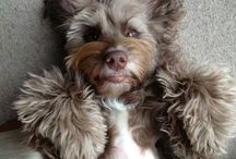 I'm in love with every dog