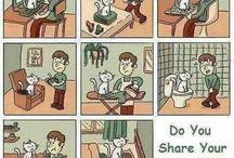 Sobre gatos ^~^