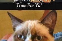 Grumpy Cat/ CATS