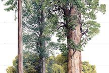 Pohon ajaib