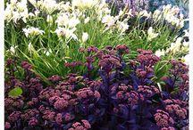 мир красок и цветов
