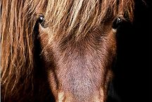 Horse Studio Photography Inspiration