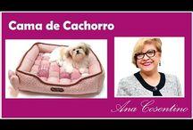acessórios pra cachorro