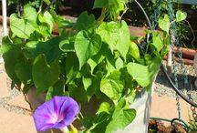 Garden Scrapbook / Pictures of ramshackle, well loved and random amateur gardens