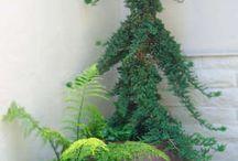 oszlopos fák konténerben