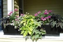 BEST Flowers  / by Diane Jones