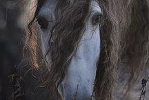 Horses for Novels
