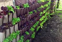 containers for food gardens