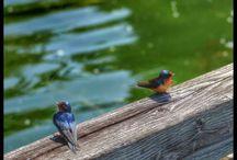 Nature at Carillon Point