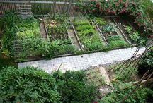 Garden Ideas / by Stephanie Holzer