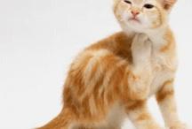kitties! / cats and kittens