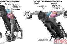 Training: Shoulders