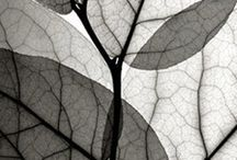 Detailed photographs