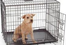 Artículos de interes / Artículos de interes sobre la educación y el transporte seguro de perros.